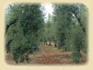 olive_row4